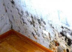Что делать, если в доме изнутри потеют стены?