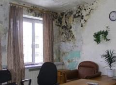 Что делать, если потеет стена в квартире?