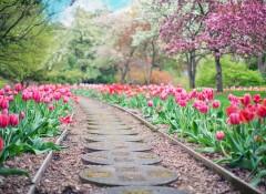 Благоустройство дачного участка: как красиво обустроить сад и огород